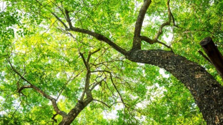 objectifs environnementaux et résultats